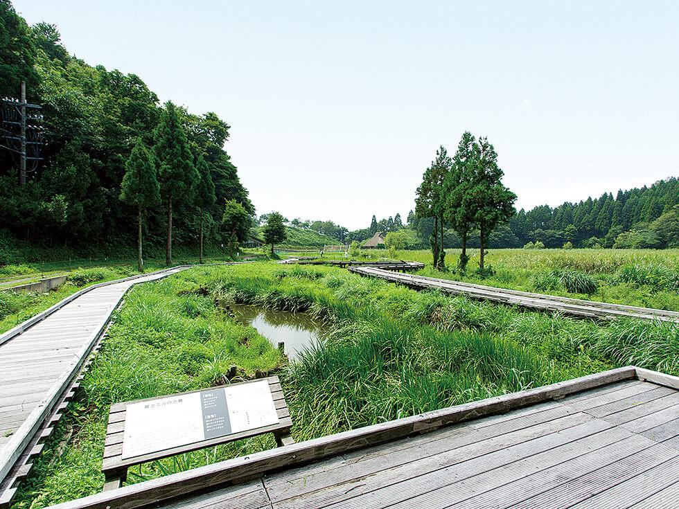 中池見湿地